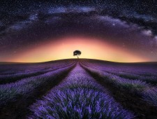 Master of Light Gold - JESUS M. GARCIA FLORES (Spain)  - Lavender Field and Milky Way