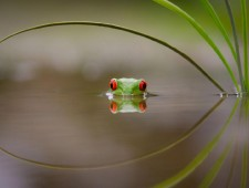 SALON Bronze Medal - kutub uddin (United Kingdom)  - Beauty of reflection
