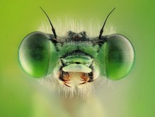 UPI Ribbon - MISHAL ALRAYHAN (Saudi Arabia)  - GREEN THE DEMSELFLY
