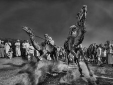 PSA Honorable Mention - AbdulAziz Albagshi (Saudi Arabia)  - Racing camels