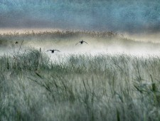 PSA Honorable Mention - Normante Ribokaite (Lithuania) - In the fog with ducks 3